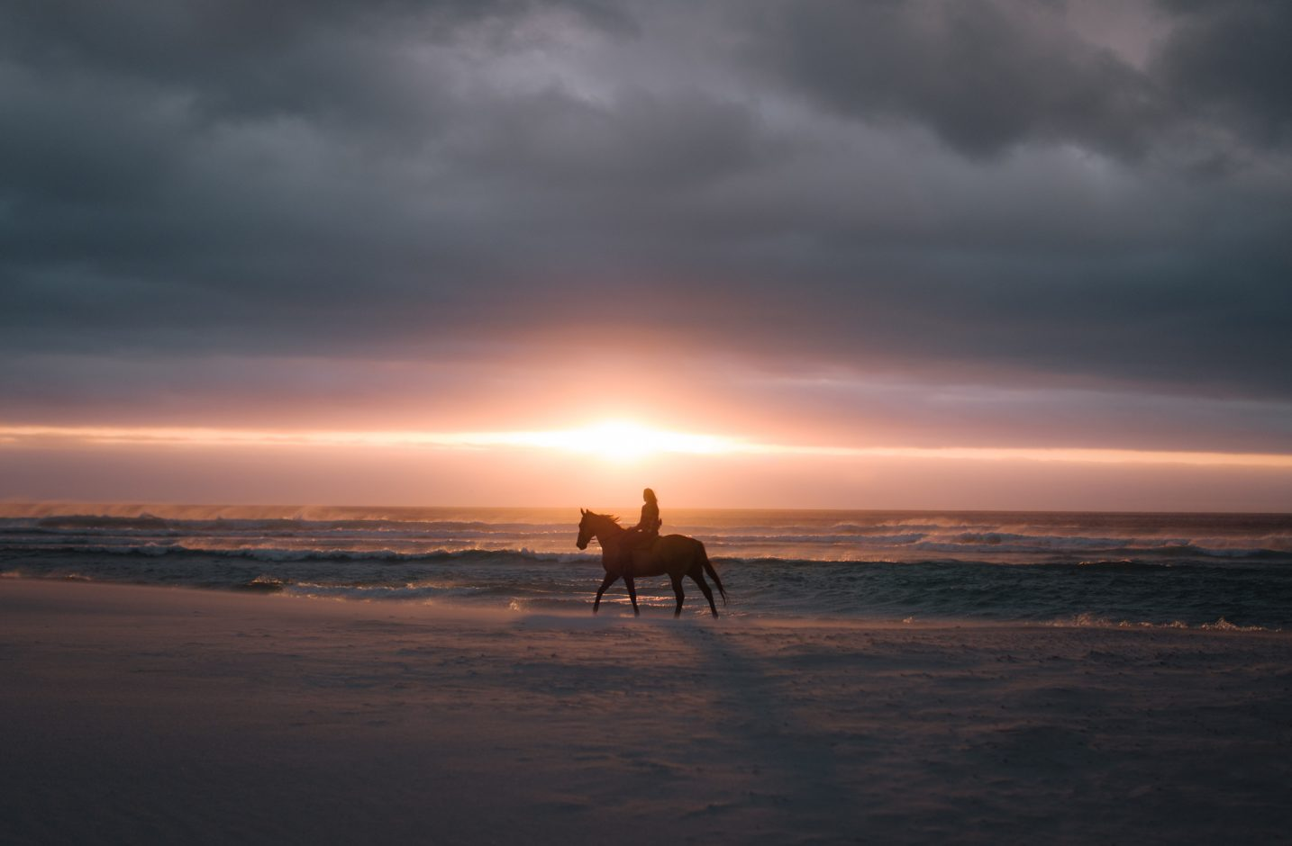 Horse rising on Woolacombe Beach North Devon